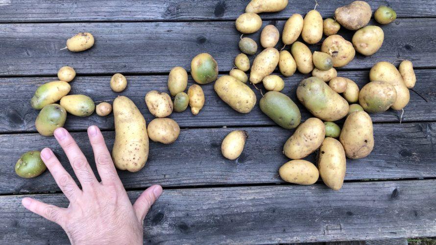 種芋の悲劇