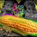 トランス脂肪酸&遺伝子組み換え食品。一体どちらを取る?
