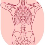 背骨が老化する理由