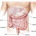 健康になりたいと思うなら、まず腸を整えなさい!①