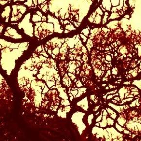 呪われた木