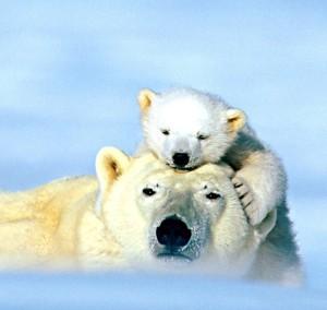 ANIMAL-LOVE-